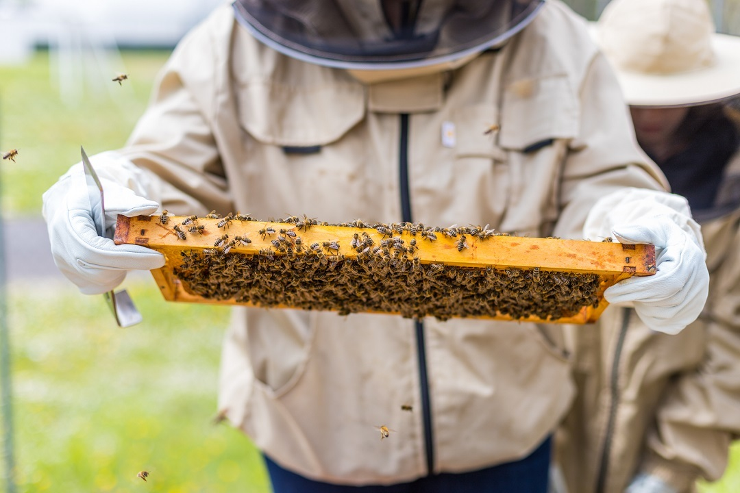 Bienen-Projekt Mittelschule Kobersdorf