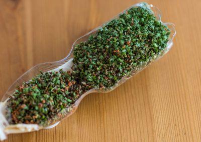 Garteln: Indoor Kresse anbauen