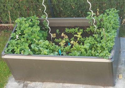 Saisonales Obst und Gemüse