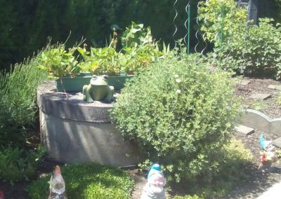 Gemüse-Anbau im Garten