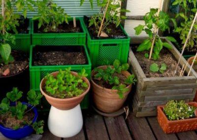 Selbstgepflanztes Gemüse