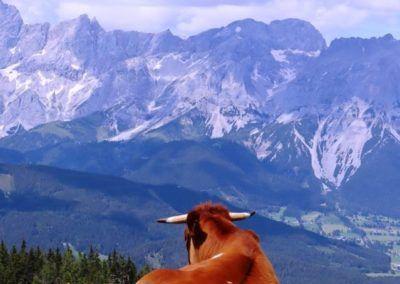 Kuh und du