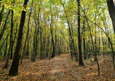 Seele baumeln lassen im Wald