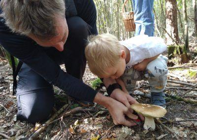 Schwammerl/Pilze suchen