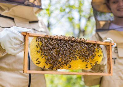 Waldquelle für Morgen: Bienen-Projekt der Mittelschule Kobersdorf