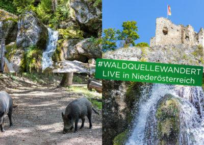 Unsere Ausflugsziele #WALDQUELLEWANDERT LIVE